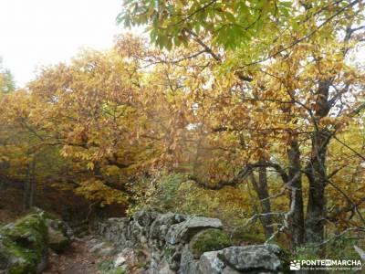 Ruta de los Castaños, Rozas de Puerto Real;grupos amigos madrid ruta el chorro madrid excursiones s